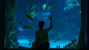 Woman looking at fish at the Duluth Aquarium