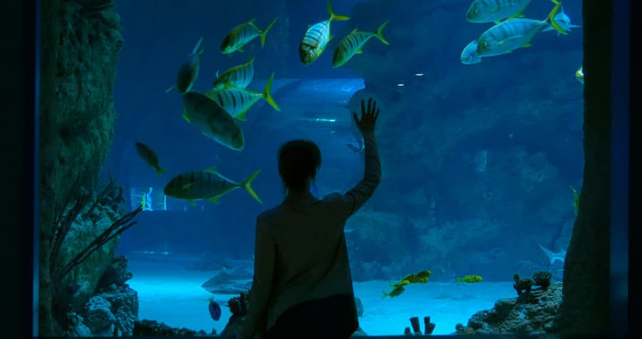 Woman looking at fish at the Duluth Aquarium